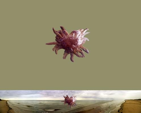 starfish-saturation